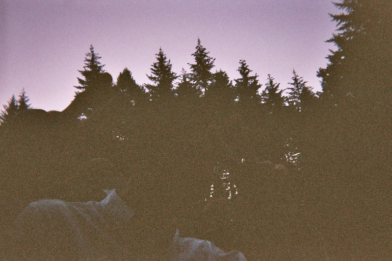 Underexposed Image from A Disposable Camera Without Flash